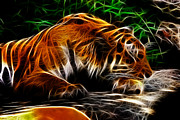 Tiger Fractal Framed Prints - Fractal tiger Framed Print by Andre Faubert