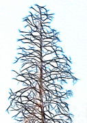 Bare Trees Mixed Media Metal Prints - Fractal Tree Metal Print by Steve Ohlsen