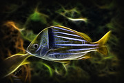 Jeff Swanson - Fractalius-Aquatic Fish 2