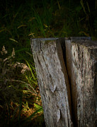 Old Fence Post Prints - Fracture Print by Odd Jeppesen