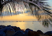 Puerta Vallarta Prints - Framed by Fronds Print by Anne Mott