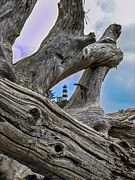 Drift Wood Framed Prints - Framed Lighthouse Framed Print by Robert Bales