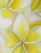 Ahmed Amir Metal Prints - Frangipani Metal Print by Amir