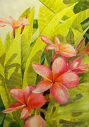 Todd Derr - Frangipani In Pink