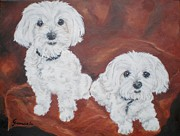 Maltese Dogs Framed Prints - Frankie and Sami Framed Print by Graciela Castro