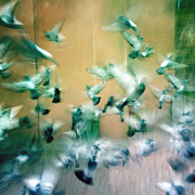 Animals Art - Frantic wing beats - many scared pigeons by Matthias Hauser