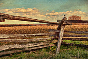 Split Rail Fence Prints - Free As A Bird Print by Joanne Shedrick