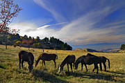 Yellow Leaves Prints - Free horses at the mountains Print by Guido Montanes Castillo