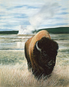 American Bison Pastels Prints - Free to Roam Print by Karen Cade