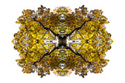 Kaleidoscope Art - Freefall by Debra and Dave Vanderlaan
