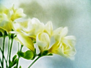 Lemon Art Posters - Freesias Poster by Sharon Lisa Clarke