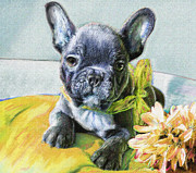 Dogs Digital Art Metal Prints - French Bulldog Puppy Metal Print by Jane Schnetlage