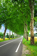 Europe Photo Framed Prints - French country road Framed Print by Elena Elisseeva