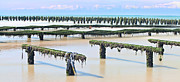 French Coast Framed Prints - French mussel aquaculture Framed Print by Dirk Ercken