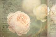 Jenny Rainbow - French Nostalgic Roses