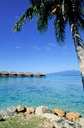 Dream Bay Prints - French Polynesia Tahiti Moorea Print by Anonymous