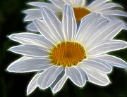 Kathie Mccurdy Prints - Fresh As A Daisy Print by Kathie McCurdy