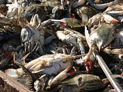 Alfred Ng - fresh crabs