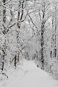 David Yunker Prints - Fresh Fallen Snow Print by David Yunker