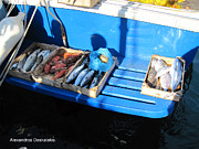 http://www.hellenicaworld.com/Greece/Geo/Hydra/en/Hydra - Fresh Fish in Hydra by Alexandros Daskalakis