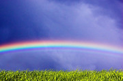 Agricultural Art - Fresh grass and sky with rainbow by Michal Bednarek
