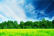 Horizontal Art - Fresh green spring landscape by Michal Bednarek