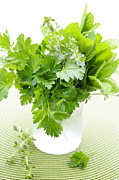 Vegetable Photo Posters - Fresh herbs in a glass Poster by Elena Elisseeva