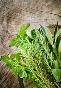 Mythja Photos - Fresh herbs by Mythja  Photography