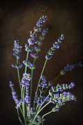 Mythja Posters - Fresh lavender Poster by Mythja  Photography