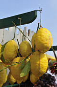 Vitamine Photos - Fresh lemons at the market by Matthias Hauser