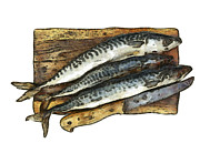 Mackerel Posters - Fresh mackerel on chopping board Poster by Michal Boubin