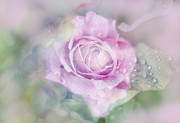 Abstract Flowers Photos - Fresh Morning Rose. Floral Abstract by Jenny Rainbow