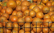 Sour Art - Fresh Natural Oranges for Sale by Yali Shi