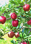 Fruit Tree Art Paintings - Fresh Organic Apples by Lanjee Chee