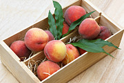 Peaches Photo Prints - Fresh peaches Print by Rosemary Calvert