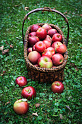 Fall Grass Prints - Fresh picked apples Print by Edward Fielding