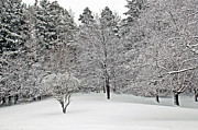 Fresh Snow Scene Print by Aimee L Maher