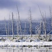 Featured Framed Prints - Fresh Snowfall And Bare Trees Framed Print by Ken Gillespie