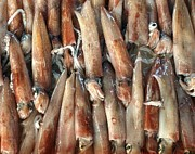Squid Photos - Fresh Squid for Sale by Yali Shi