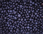 Aduldej Sukaram - Freshly Blueberries