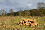 Chopped Prints - Freshly Chopped Logs In A Field Print by Fizzy Image