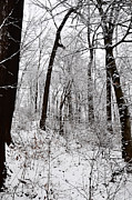 Fairmount Park Prints - Freshly Fallen Snow Print by Bill Cannon