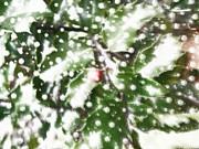 Patricia Sundik - Freshly Falling Snow
