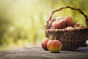 Mythja Art - Freshly harvested apples by Mythja  Photography