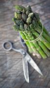 Scissors Posters - Freshly harvested asparagus Poster by Nikolina Petolas