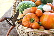 Scissors Posters - Freshly harvested vegetables Poster by Mythja  Photography