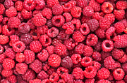 Raspberry Posters - Freshly picked Poster by Delphimages Photo Creations