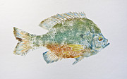 Fish Print Mixed Media Posters - Freshwater Bluegill Poster by Nancy Gorr