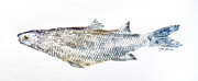 Fish Rubbing Prints - Freshwater Jumping Mullet Print by Nancy Gorr
