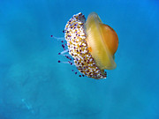 Under The Ocean Prints - Fried Egg jellyfish Print by Vilainecrevette